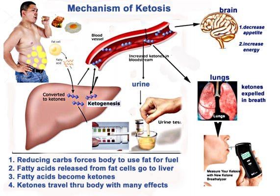 Ketosis mechansims in HCG and Keto Diet